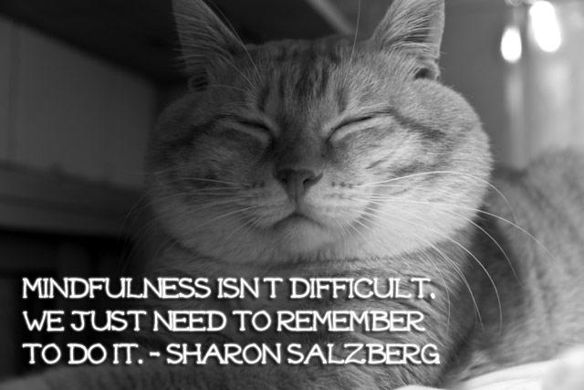 mindful_cat